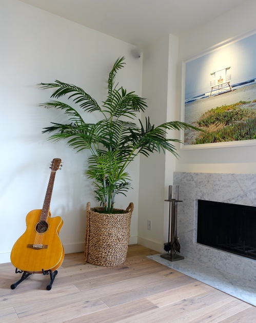 guitar and palm