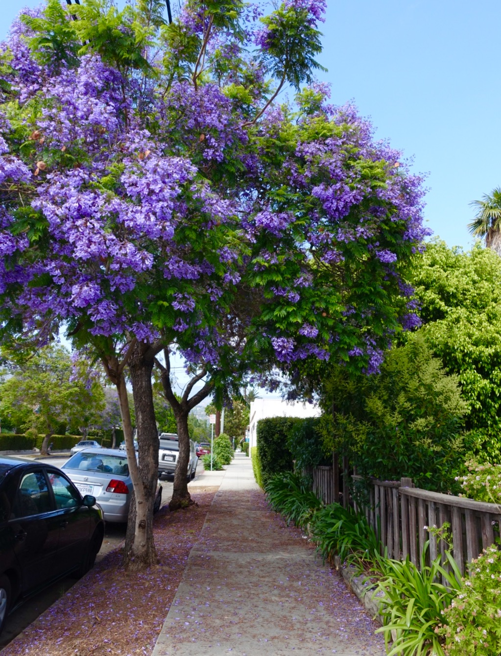 Springtime in Santa Barbara