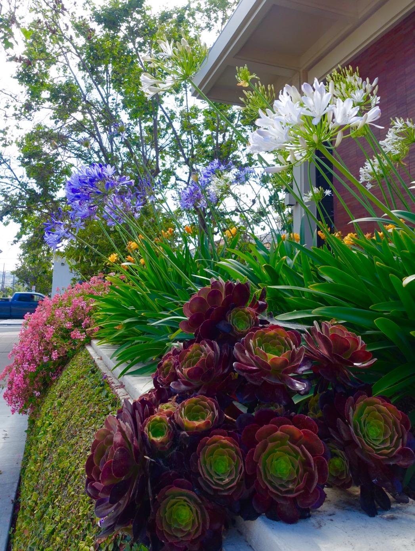 Spring in Santa Barbara